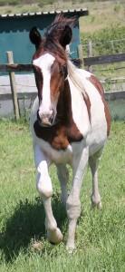 a horse11