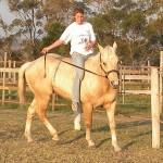 stallion-yello